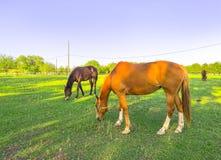 P?turages verts des fermes de cheval photographie stock