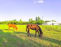 P?turages verts des fermes de cheval images libres de droits