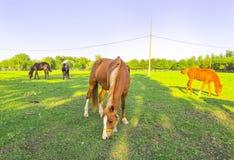 P?turages verts des fermes de cheval photographie stock libre de droits