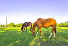 P?turages verts des fermes de cheval photos stock