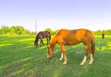 P?turages verts des fermes de cheval images stock