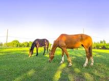 P?turages verts des fermes de cheval photo stock