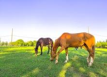 P?turages verts des fermes de cheval photos libres de droits