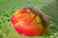 Płuczkowy mango Obraz Royalty Free