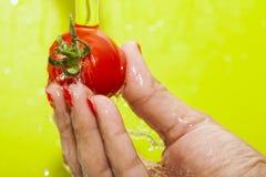 Płuczkowy pomidor Obrazy Royalty Free