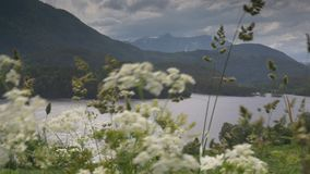1080p, View Through Weed On Fjord, Norway Stock Photo