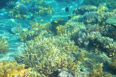 Płytka denna rafa koralowa Tropikalnych seashore mieszkanów podwodna fotografia Obraz Royalty Free