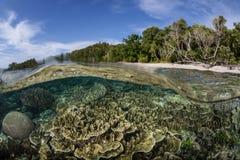 Płytka rafa koralowa 2 Obraz Royalty Free