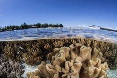 Płytka rafa koralowa 4 Fotografia Stock