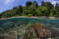Płytka rafa koralowa 2 Zdjęcie Stock