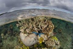 Płytka rafa koralowa 2 i chmury Obrazy Royalty Free