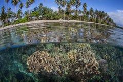 Płytka rafa koralowa 3 i wyspa Obrazy Royalty Free