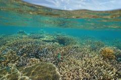 Płytka rafa koralowa z rybim Nowym Caledonia Obraz Stock