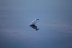 płytkie morze Zdjęcie Stock
