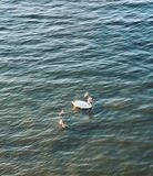 Pływał i jego dzieci zdjęcie stock