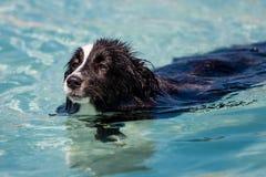 Pływacki pies Fotografia Royalty Free
