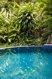 Pływackiego basenu woda i zieleni drzewko palmowe opuszczamy w tropikalnym ogródzie Wyspa Samui, Tajlandia Obrazy Stock