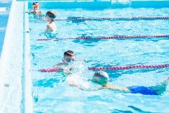 Pływania spotkanie Obrazy Royalty Free