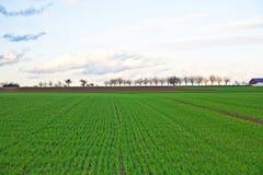País aberto na primavera Foto de Stock
