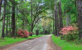 País bajo Carolina del Sur del camino trasero fotografía de archivo