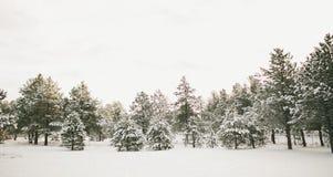 País das maravilhas do inverno de Colorado Imagens de Stock