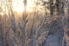País das maravilhas do inverno na madeira foto de stock royalty free
