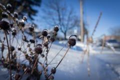 País das maravilhas ensolarado e gelado do inverno fotos de stock