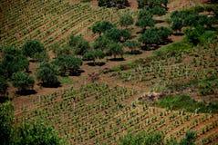 País de Calatafimi (Italia Fotografia de Stock Royalty Free
