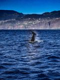 País de Gales en Madeira con el mar Fotos de archivo