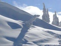 País de las maravillas del invierno Imagenes de archivo