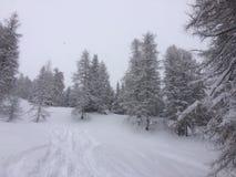 País de las maravillas del invierno Fotografía de archivo