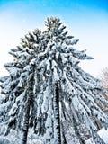 País de las maravillas del invierno Foto de archivo libre de regalías