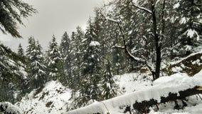 País de las maravillas del invierno/bosque coronado de nieve Fotografía de archivo libre de regalías