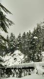 País de las maravillas del invierno/bosque coronado de nieve Foto de archivo