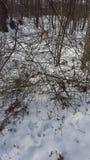 País de las maravillas del invierno de la nieve de Ohio en el bosque Imágenes de archivo libres de regalías