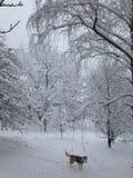 País de las maravillas del invierno y nuestro perro esquimal en Serbia foto de archivo
