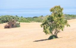 País de Sardinia selvagem Fotos de Stock