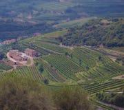 País de vinho Fotos de Stock