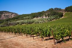 País de vino Foto de archivo libre de regalías