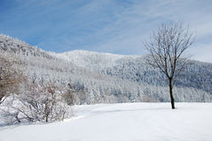 País del invierno de Beskydy Foto de archivo libre de regalías