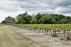 País del viñedo Foto de archivo libre de regalías