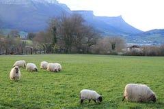País do Basque do mendilerroa de Gorobel Imagens de Stock