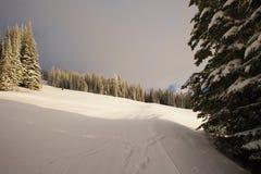 País do esqui da floresta Imagem de Stock