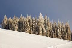 País do esqui da floresta Imagem de Stock Royalty Free
