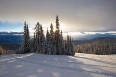 País do esqui da floresta Fotos de Stock Royalty Free