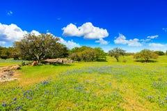 País do monte de Texas imagem de stock royalty free