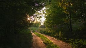 País do por do sol fora da estrada com raios de luz de nivelamento bonitos do sol, árvores verdes da folha em torno - a natureza  filme