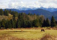 País rural Imagem de Stock Royalty Free