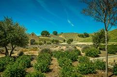 País vinícola central de California Imagen de archivo