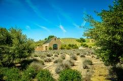 País vinícola central de California Foto de archivo libre de regalías